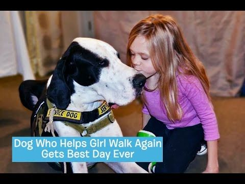 Sick Little Girl Rewards Her Great Dane Service Dog With A