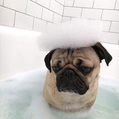 Wonderful Dogo Chubby Adorable Dog - 777f175c6e89f4764a786fd6ec1e5efe  2018_65517  .jpg