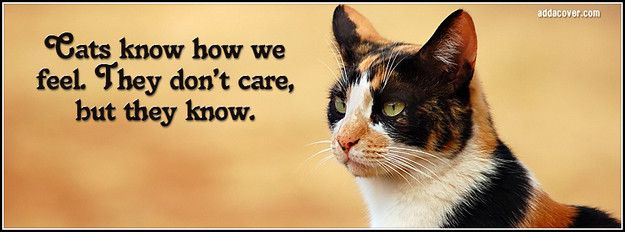 Cats Quote Facebook Cover Cat quotes funny, Cat quotes, Cats