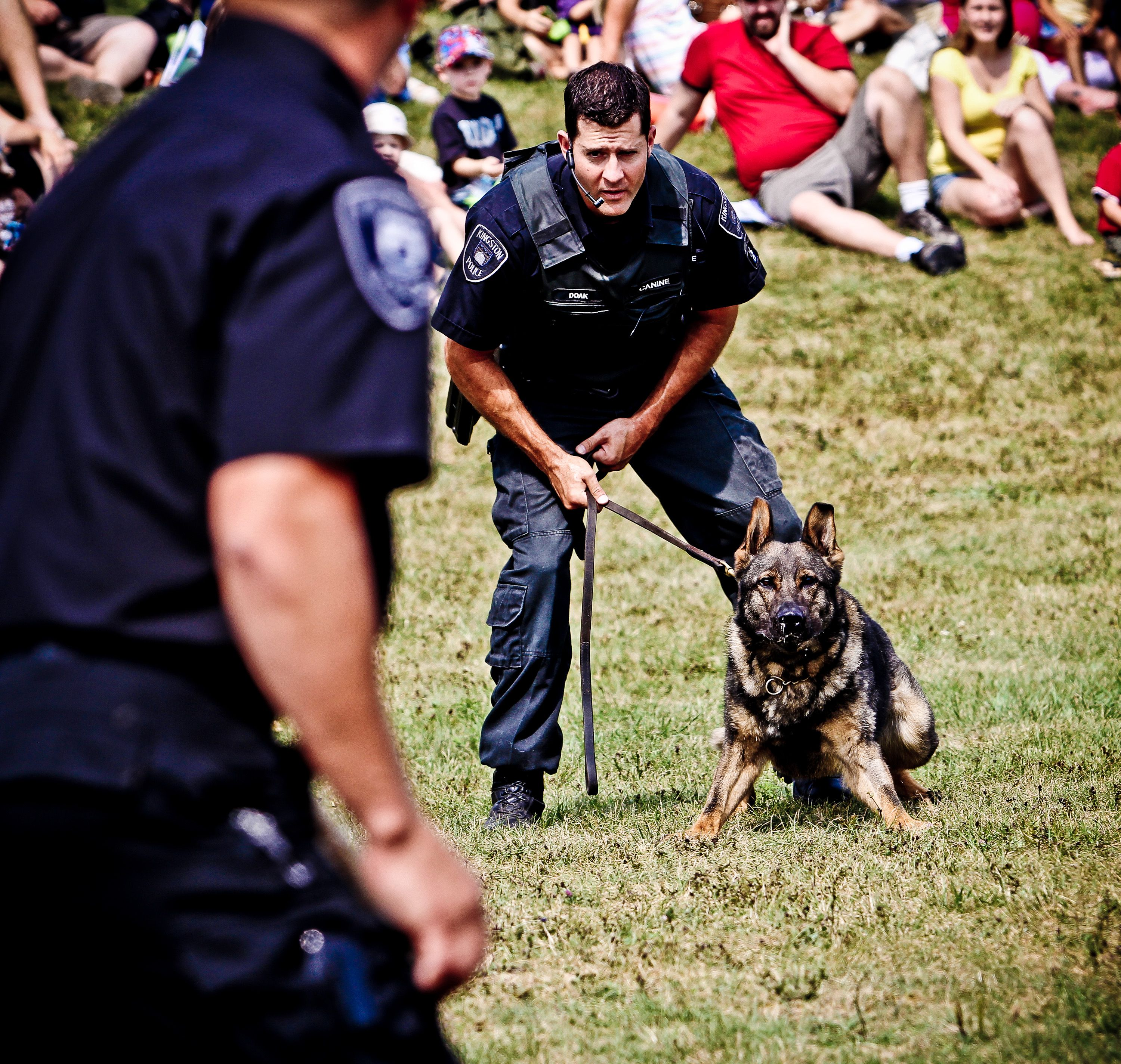 Canine Officer Paul Doak And His Partner Knox Demonstrating Their Abilities At Kingston S Annual Sheep Dog Trials Working Dogs Canine Police Dogs