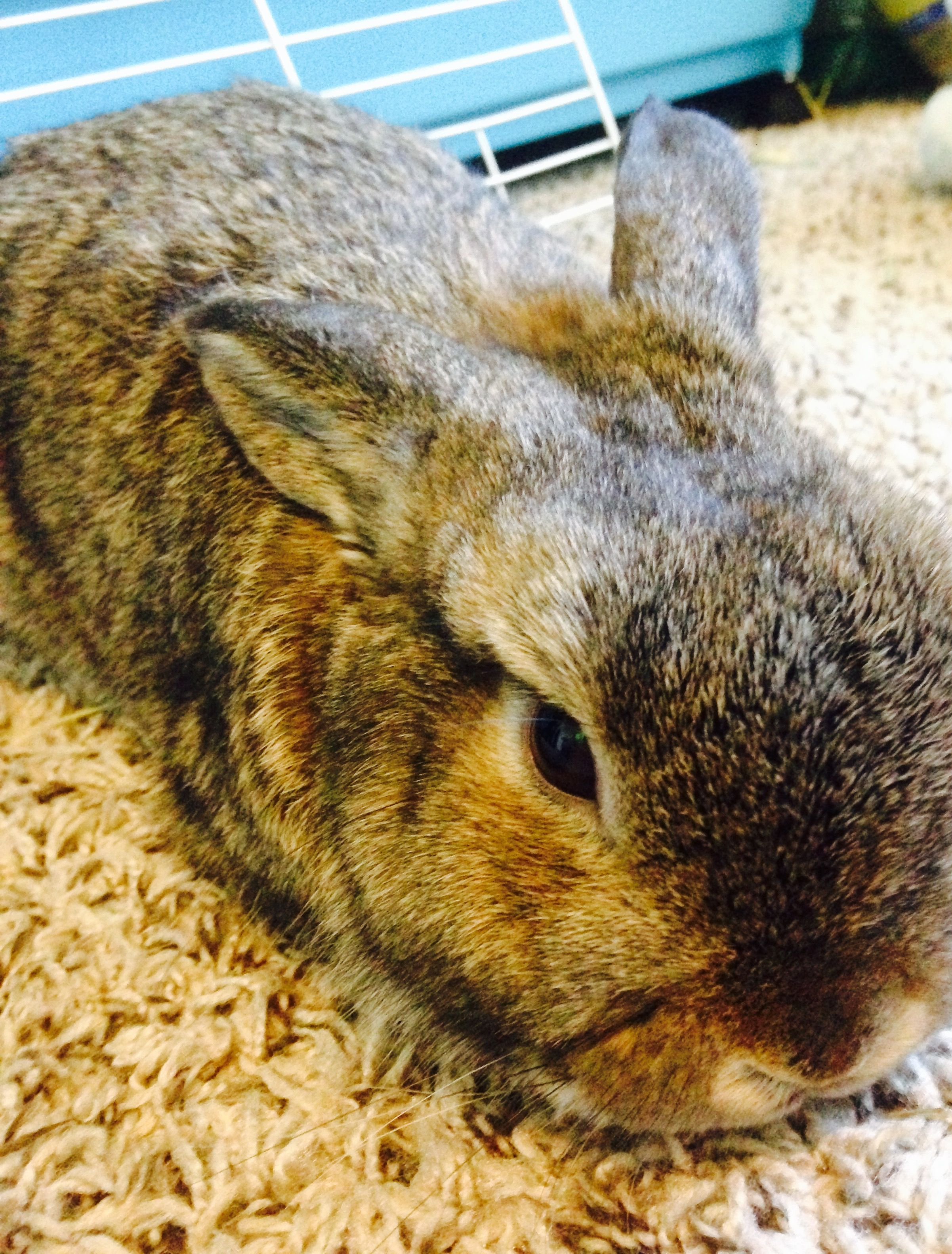 Cute little bunny dwarf bunnies bunny care vintage bunny