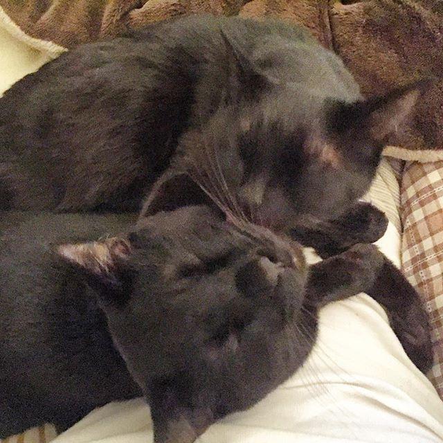 +1.heavy. #cat #cats #cutecat #cutecats #catlover #catlovers #instagramcats #catstagram #life #lifestyle #sleepycats #followme #mame #mitsu #heavy