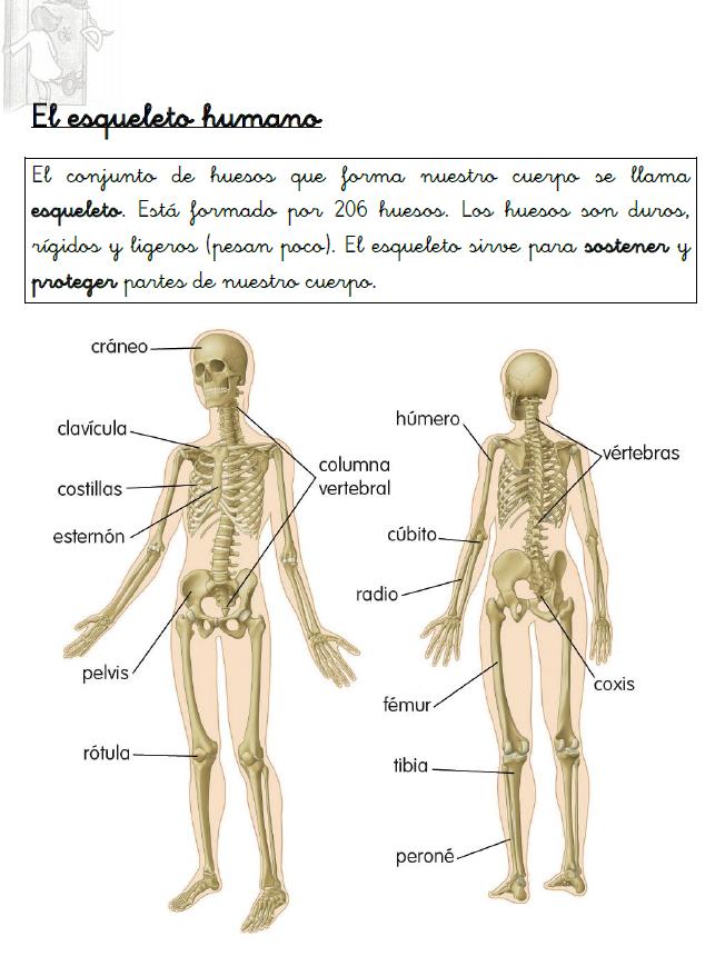 Resumen sobre el esqueleto | Cuerpo Humano | Pinterest | El ...