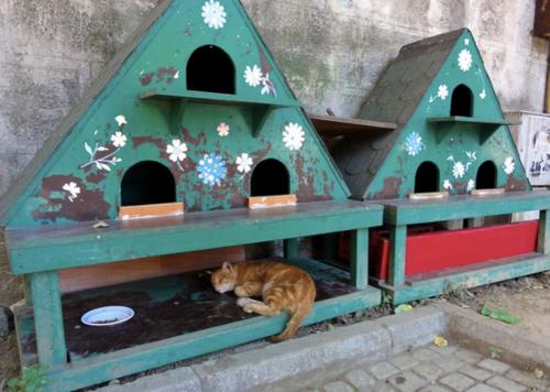coup de coeur abris pour chats errants cabanes de jardin outdoor cat shelter feral cat. Black Bedroom Furniture Sets. Home Design Ideas