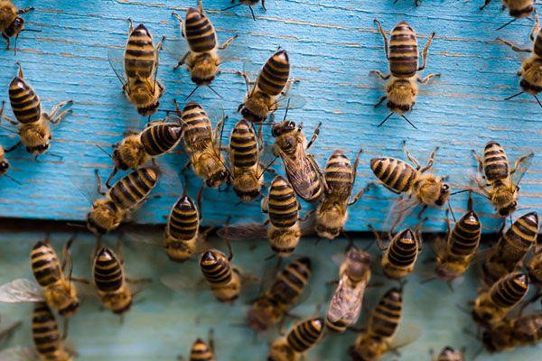 77828df904a045bb9626afd5c97b3fcc - How To Get Rid Of Bee Hive In Attic