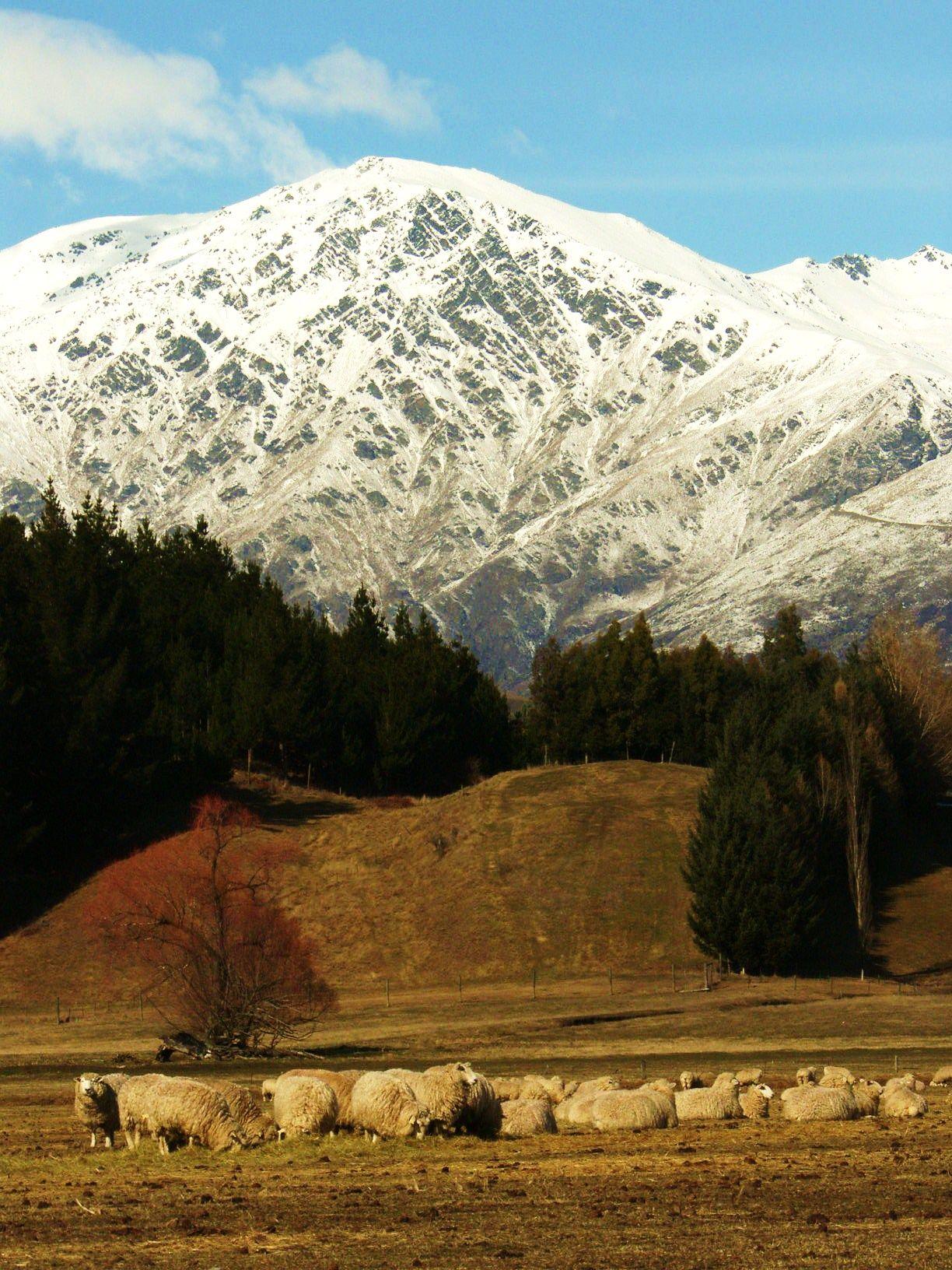 Winter in Arrowtown New Zealand