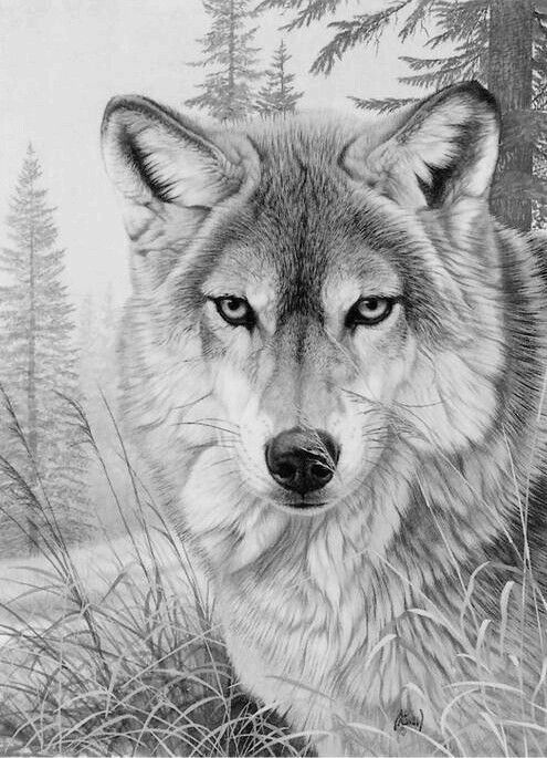 Amazing Wolf Coloring Book For Adults