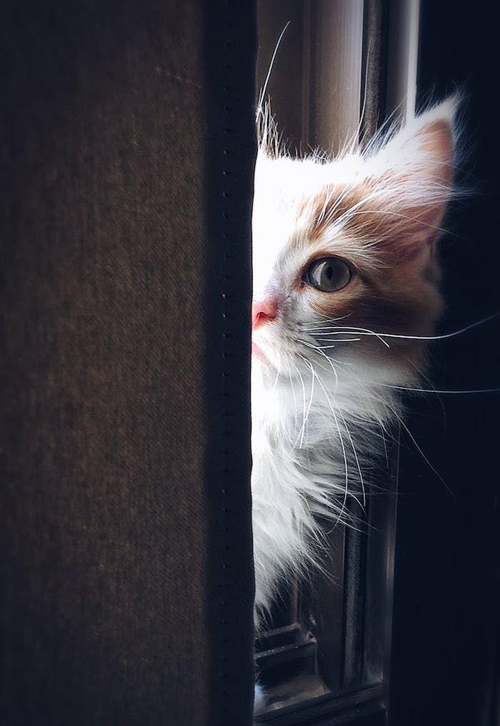 1001 Lustige Katzenbilder Und Katzenspruche Katzen Bilder Lustige Katzenbilder Katzenbilder