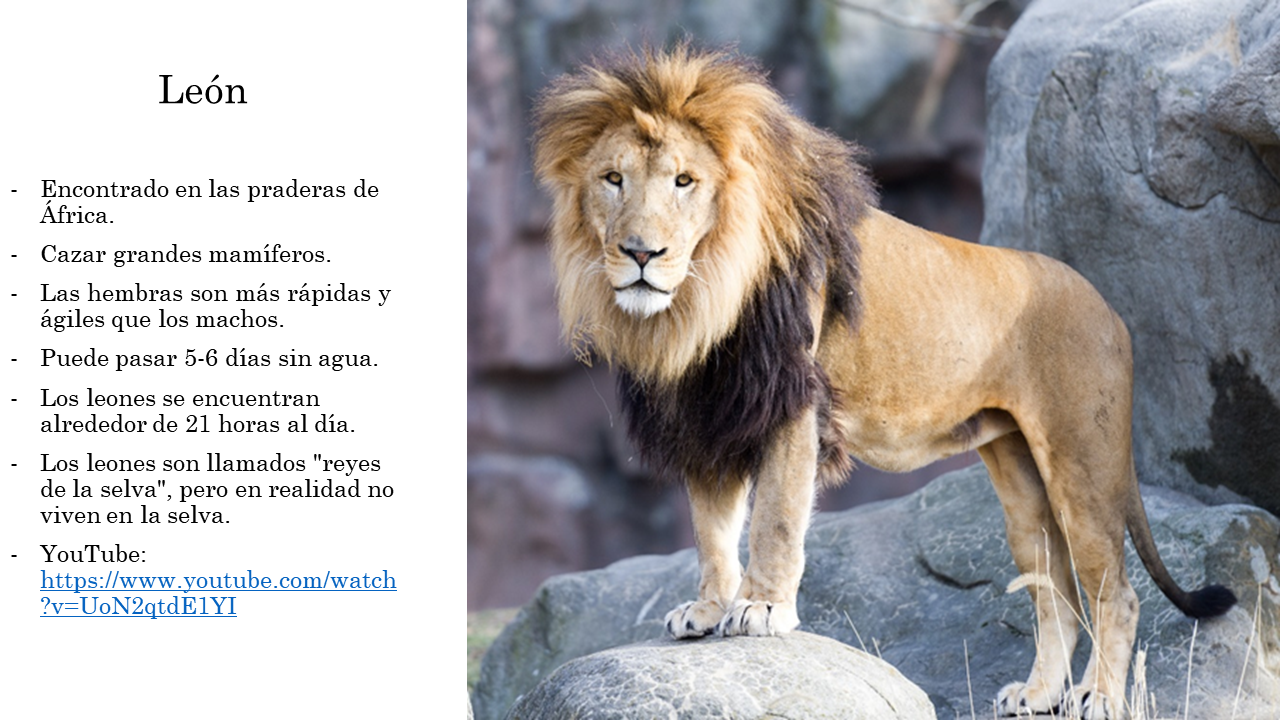 Animales comunes del zoo Zoo animals, Animal facts, Fun