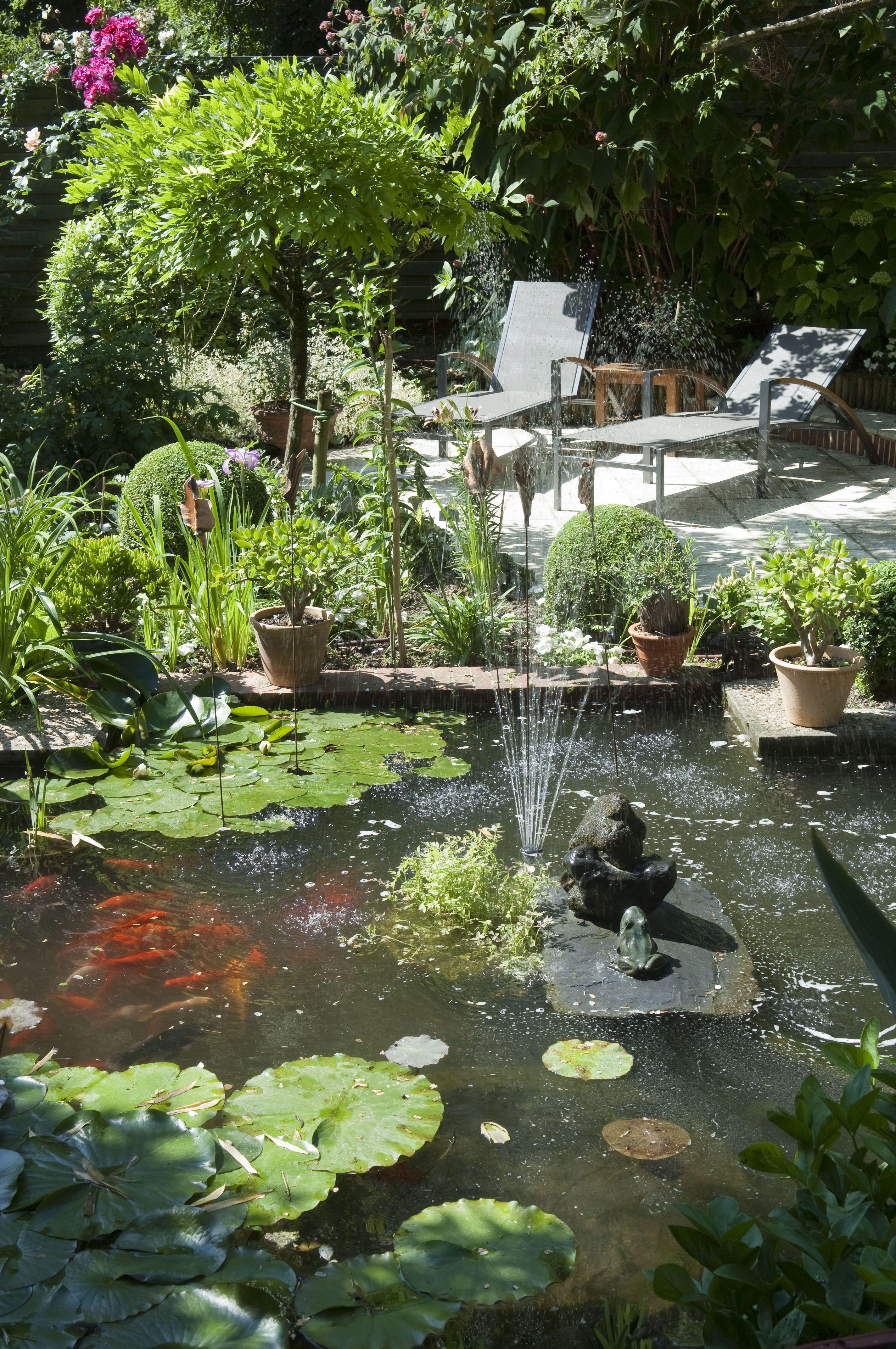 ment créer un beau jardin aquatique In The Garden