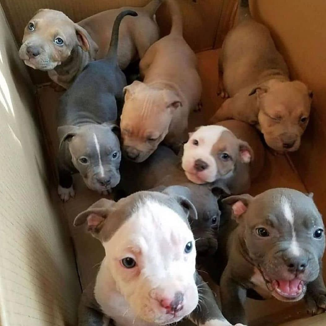 Get 3d Bull Terrier Free Stickers In 2020 Cute Baby Animals