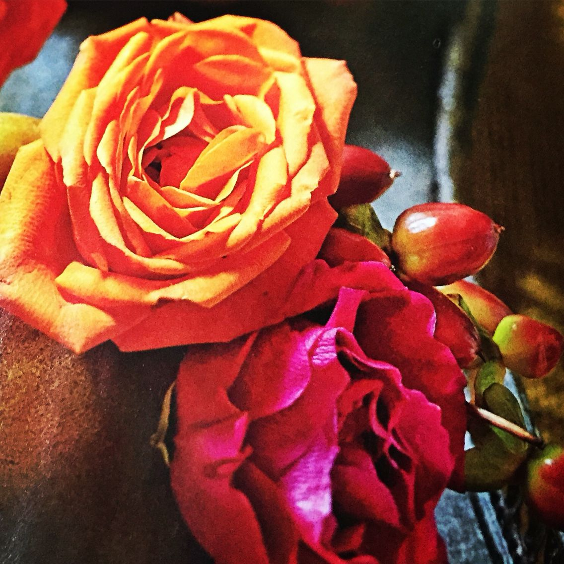 Beautiful Roses In Harvest Color Love