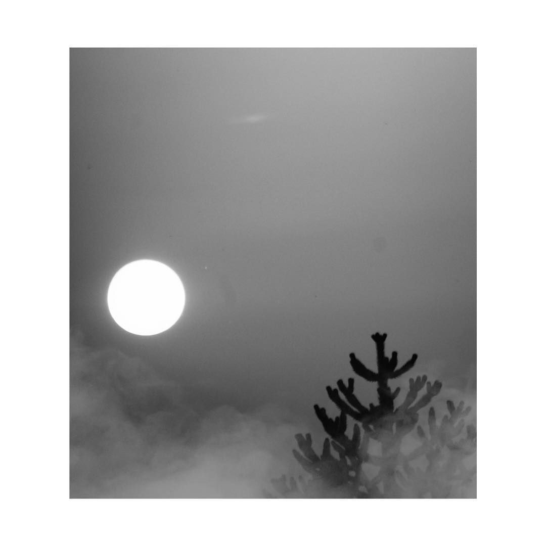 "ᴏʟʏᴍᴘɪᴀ on Instagram: ""#moon#moonlight#minimalbnw#natgeo#minimalism#minimalmood#sky#skyscraper#cloudstagram#tree#space#worldbestgram#night#beautyofnature#bw_photooftheday#worldbestgram#bnw_captures#top_bnw#everything_bnw#amateurs_bnw#picoftheday#summer#planet#earth#nightsky#wallpaper#gallery_of_bw#moodynature…"""