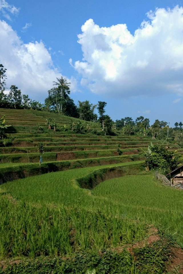Tea Garden Bandung Indonesia (With images) Outdoor