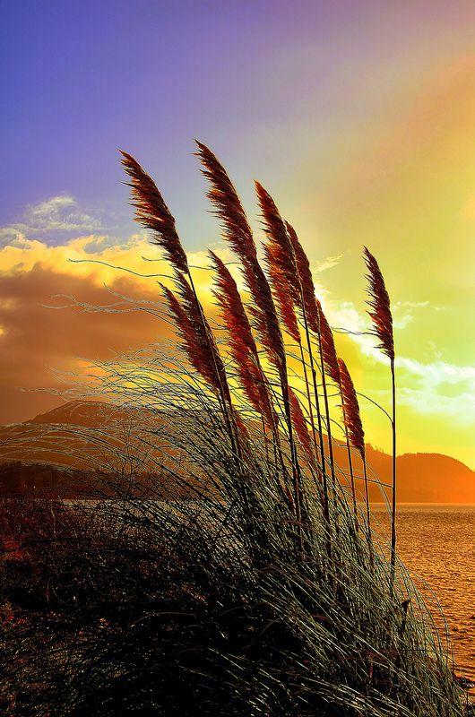 Oregon Shoreline (Photo by Jack Andreasen)