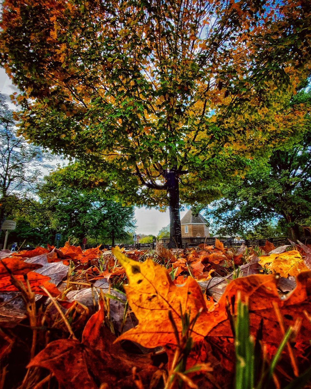 The soundtrack of fall is playing on repeat in Williamsburg at the moment. Lots of leaves 🍁 swirling in unison on the ground as geese honk in the sky above as they migrate south. 🍂🎃🍂 - - - - - - - - - - - - -