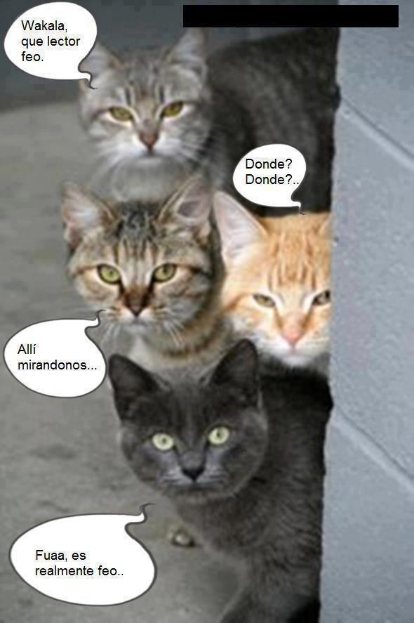 Gatos que estan espiando ...