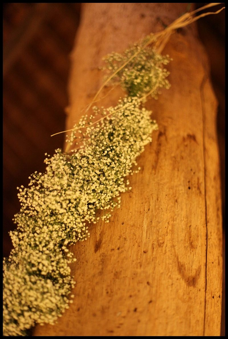 Gypsophilia decorating the four old tree trunks in The Mill Barn at Gaynes Park for a wedding reception