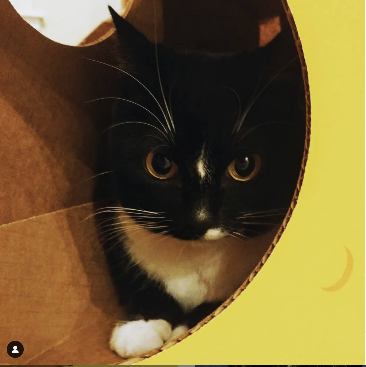 Bon Bon Starts Her Friday Night Box Pawty Cat Toys Cat Love Owning A Cat