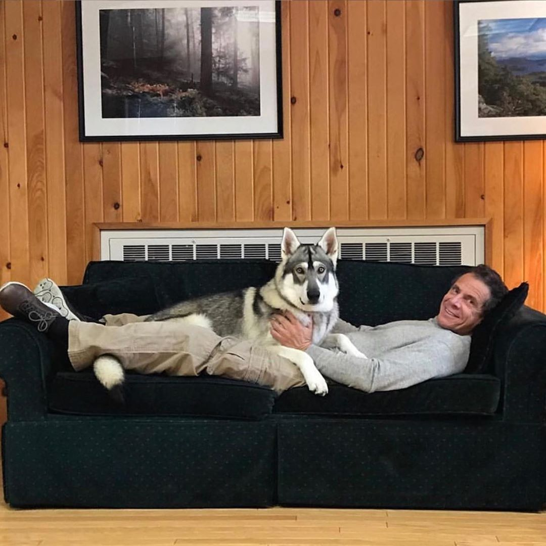 Governor Andrew M Cuomo On Instagram Happy Nationaldogday To First Dog Captain In 2020 Dogs Captain Andrew Cuomo