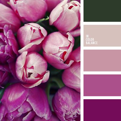 color tulipa rosada colores de las tulipas rosadas colores lila y