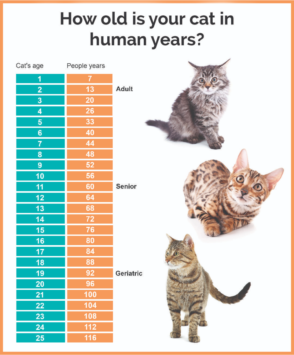 Pin By Our Love On Cat Development Chart Cats Cat Lifespan Cat Ages