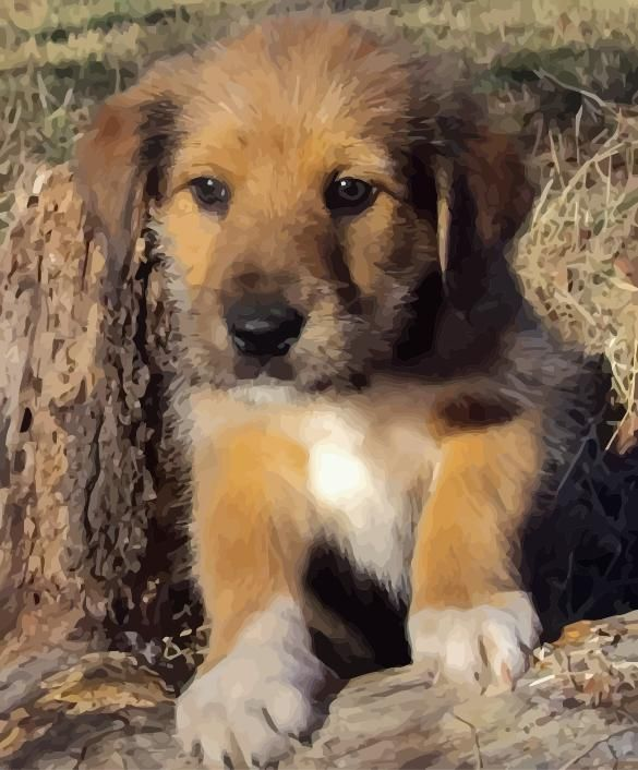 Is A Crossbreed Dog Right For You