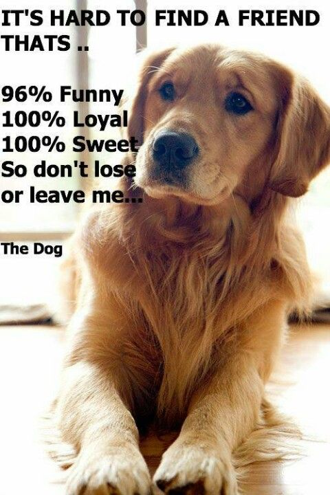 don t ever hurt a dog or leave it they will always love their