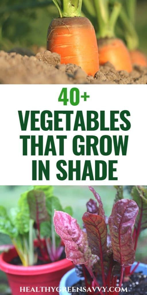 40+ Vegetables that Grow in Shade | HealthyGreenSavvy #howtogrowvegetables