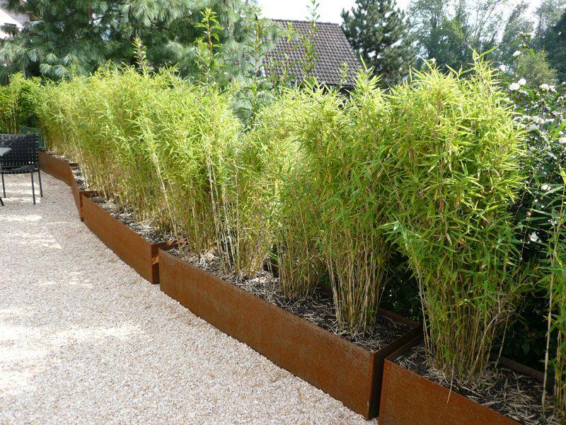 gräser topf GoogleSuche Gefäßpflanzungen im
