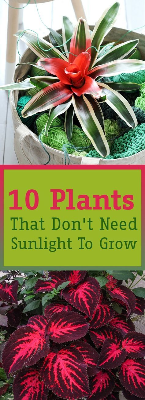 Plants To Enough Sunlight, Outdoor Plants That Does Not Need Sunlight