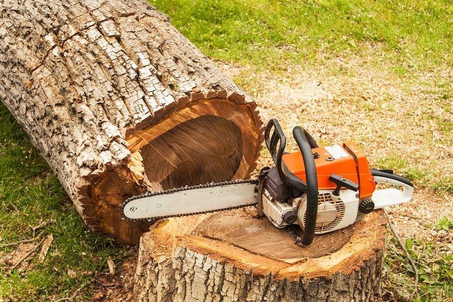 Pin by ARB UK - Tree Surgeons Oxford on ARB UK - Tree Surgeons ...