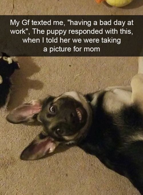 Best Funny Dogs 32 Funny and Cute Animal Pictures Of The Day | FallinPets 32 Funny and Cute #Animal Pictures Of The Day!