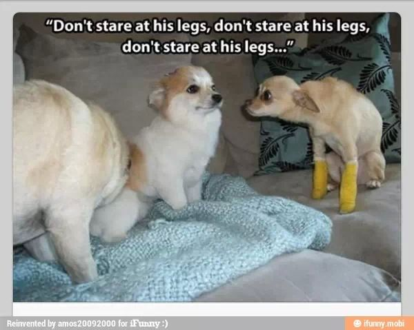 Don T Look Funny Animal Pictures Funny Pictures