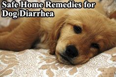 Safe Home Remedies For Dog Diarrhea Natural Alternative Remedy