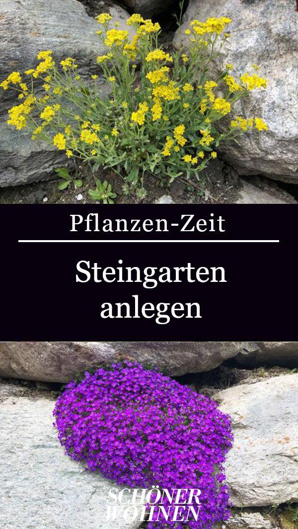 Photo of Steingarten anlegen: Ideen zum Gestalten