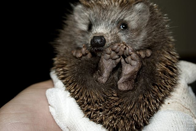 Hedgehog feet!!!!
