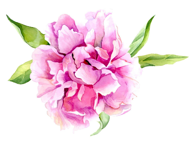Pink Peony Flower Print Of Original Watercolor Painting Watercolor
