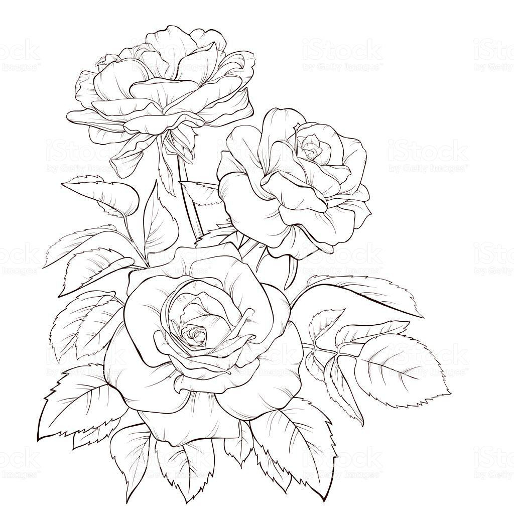Rose Bouquet Vintage Card Flower Line Drawings Rose Line Art Flower Drawing