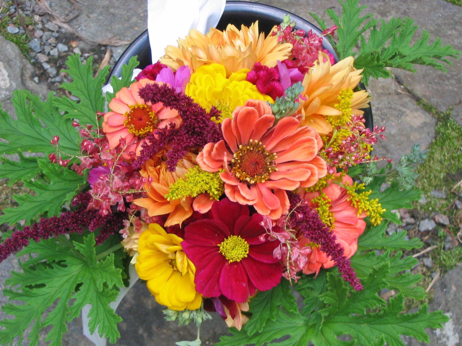 september flower gardens   ... Shady Grove Gardens: September Flower ...