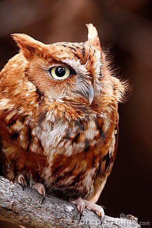 owls, owls, owls, #owls, #owl