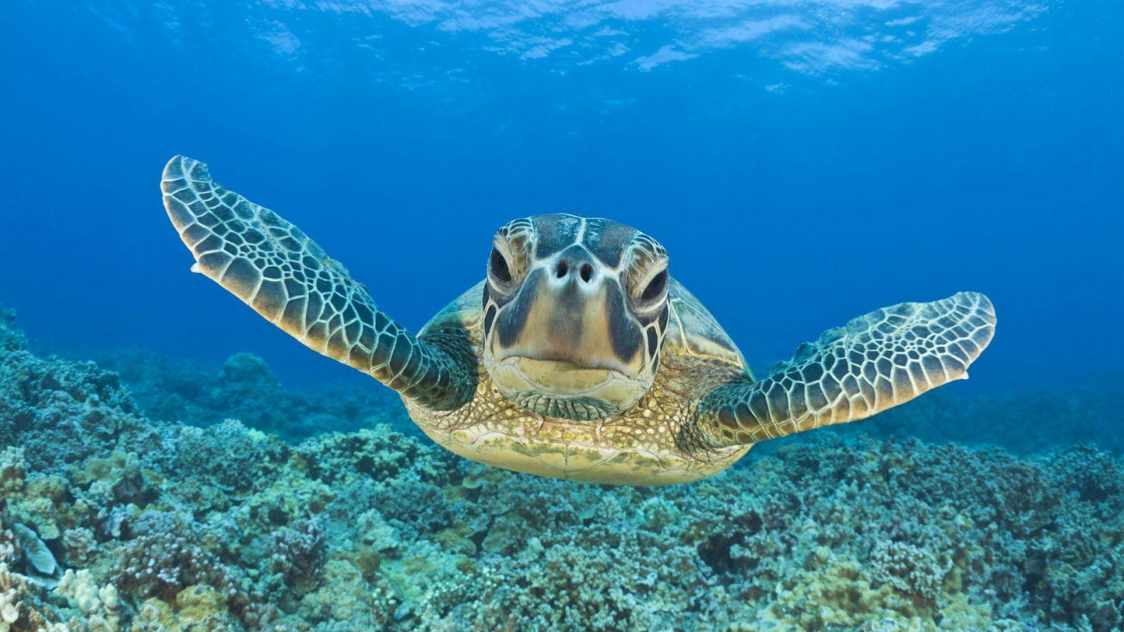 Tropical HD Underwater Wallpaper