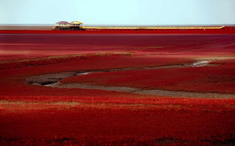Playa Roja Reserva Natural De Hekou Shuangtai China Una Planta Del Genero Botanico De Fanerogamas Paisajes Fotos De Paisajes Naturales Lugares Increibles