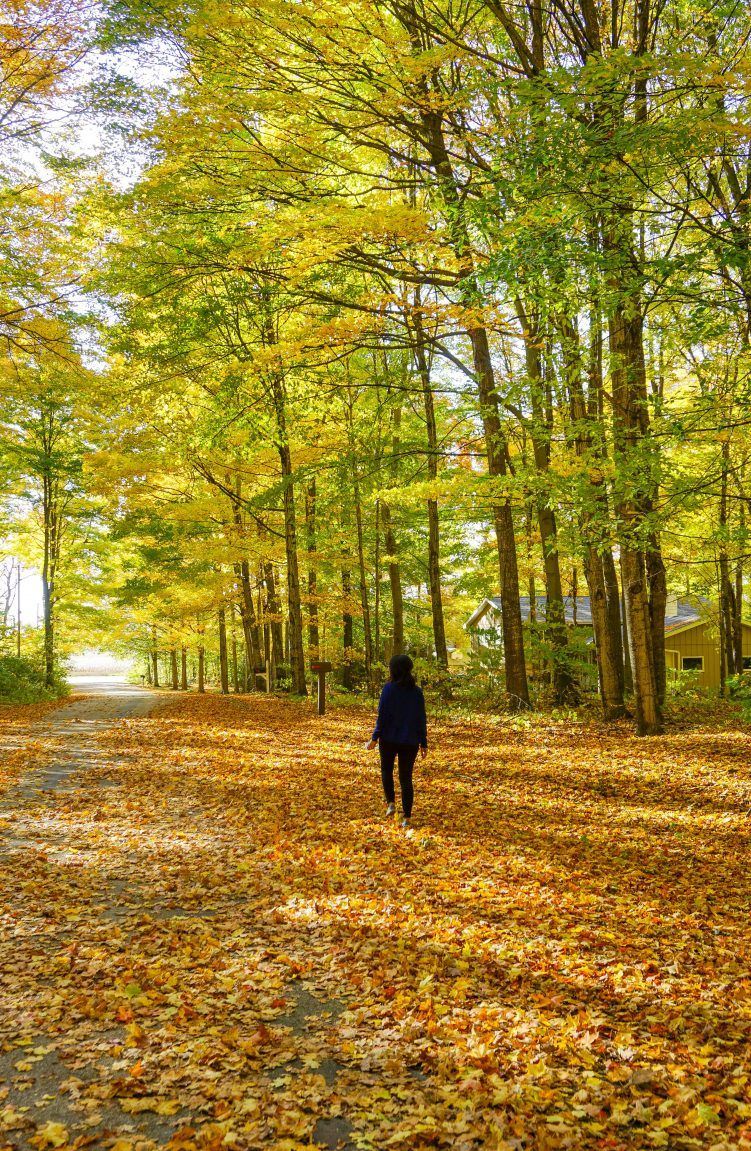 Fall Colors In Door County The Most Stunning Drive Through Northern Wisconsin This Darling World Door County Usa Travel Destinations Fall Colors