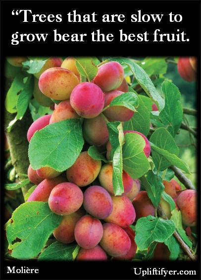 Moliere Inspirational Quotes Upliftifyer Com Miniature Fruit Trees Plum Fruit Fruit Bushes
