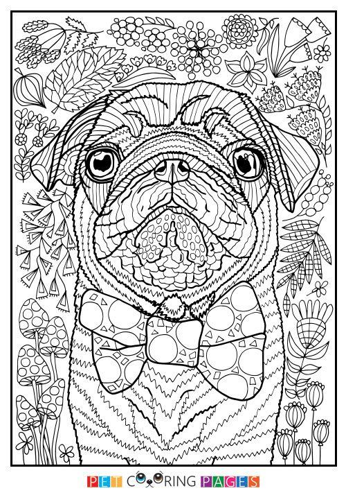 Free printable Pug coloring page