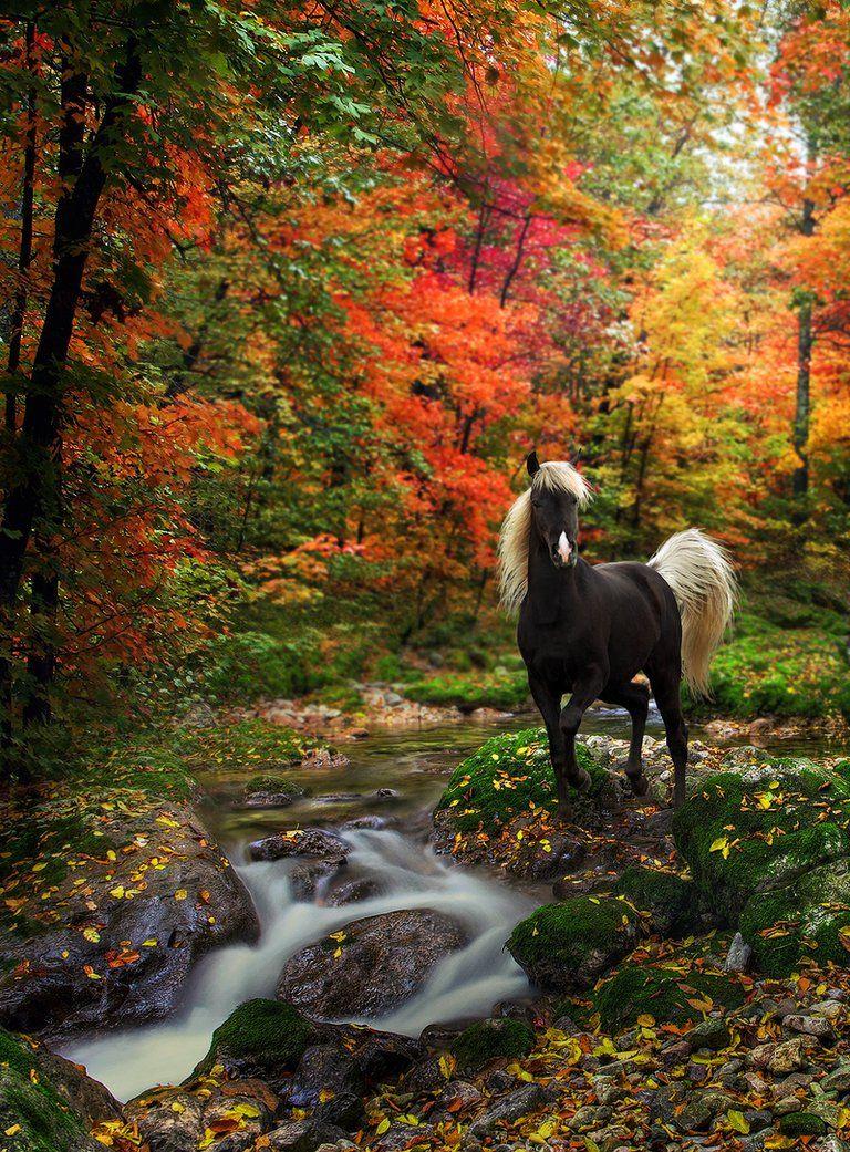Autumn Tranquility by `Emerald-Depths on deviantART