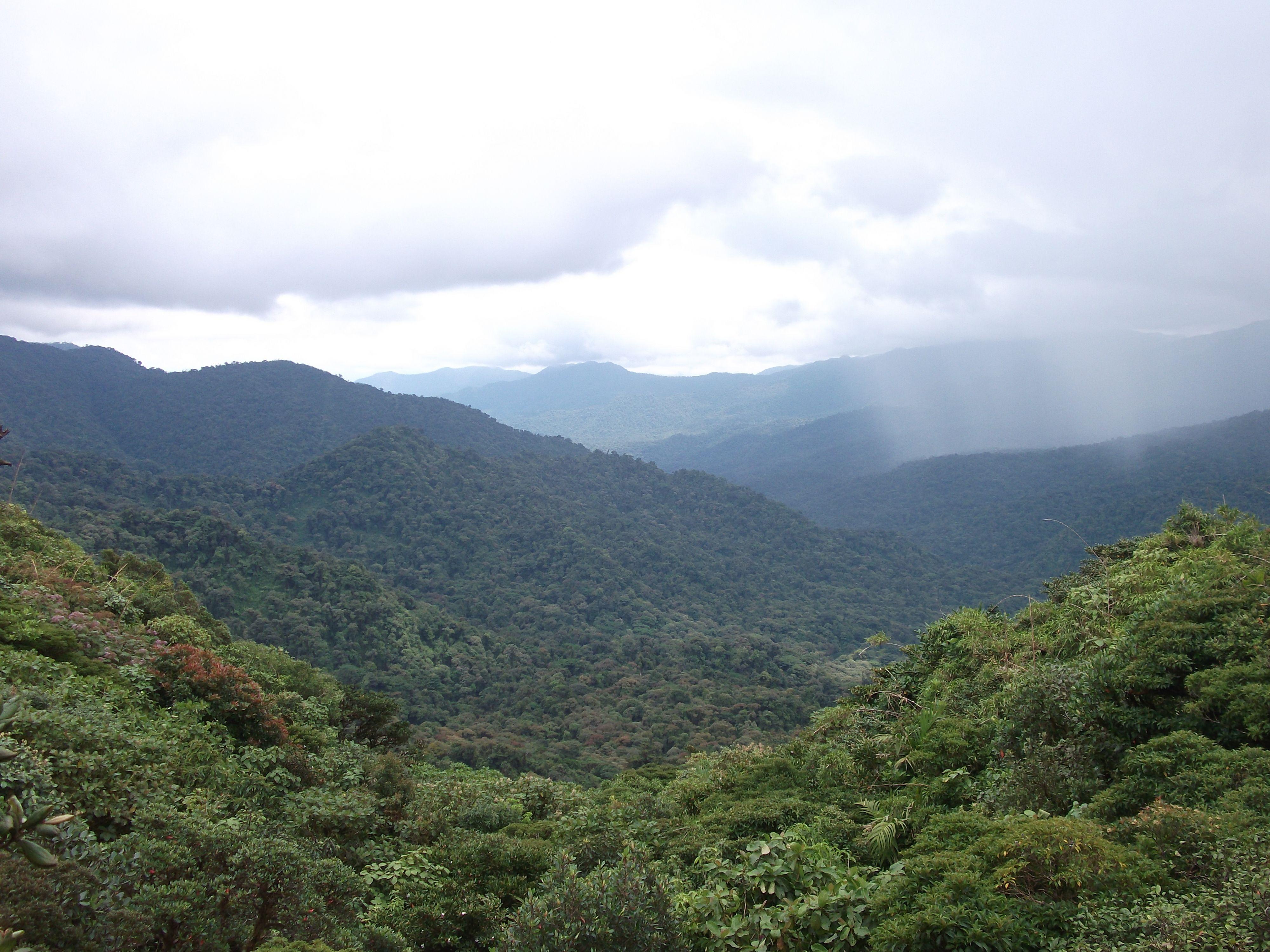 Bosque Nuboso, Monteverde