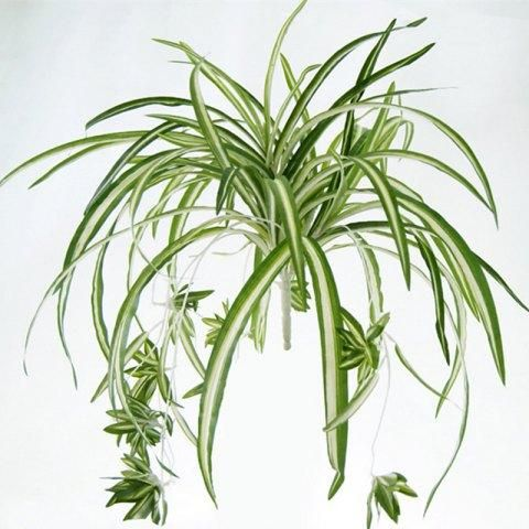 learn exactly how to care for the spider plant one of the easiest and most forgiving houseplants to grow