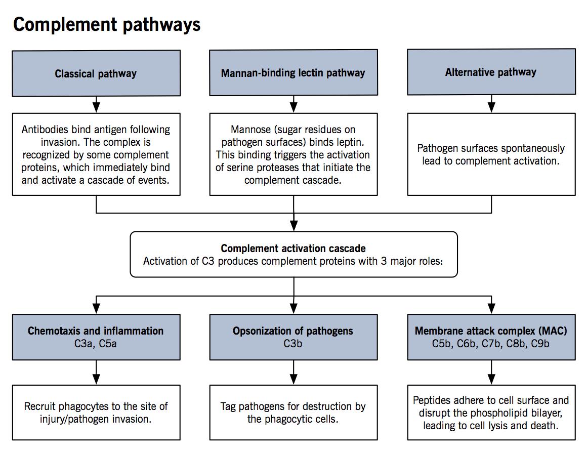 Complement Pathways